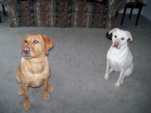 Baylee_and_Tanker_2010_010