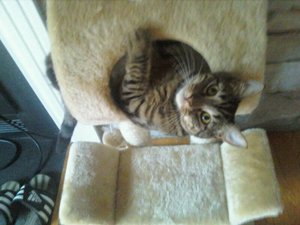 Basement_Cat